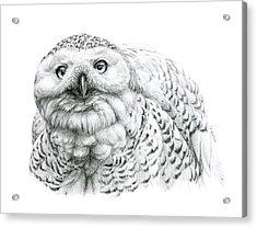 Snowy Owl -bubo Scandiacus Acrylic Print by Svetlana Ledneva-Schukina