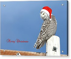 Acrylic Print featuring the photograph Snowy Owl Christmas Card by Everet Regal
