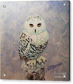 Snowy Owl Acrylic Print