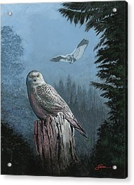 Snowy Owl Resting Acrylic Print by Harold Shull