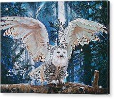 Snowy Owl On Takeoff  Acrylic Print