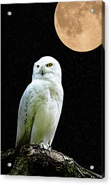 Snowy Owl Under The Moon Acrylic Print by Scott Carruthers
