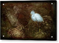 Snowy Style Acrylic Print by Marvin Spates