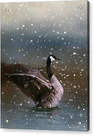Snowy Swim Acrylic Print by Jai Johnson