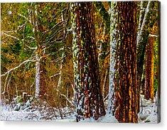 Snowy Trees Acrylic Print by Garry Gay