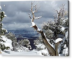 Snowy View Acrylic Print by Laurel Powell