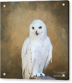 Acrylic Print featuring the photograph Snowy White by Eva Lechner