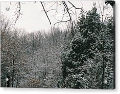 Snowy Woods Acrylic Print by C E McConnell