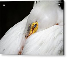 Snuggled White Pelican Acrylic Print by Penny Lisowski