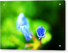 So Blue Acrylic Print