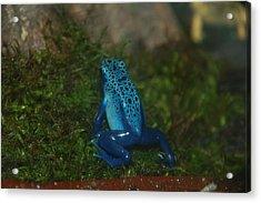 So Blue Acrylic Print by HP Hwang
