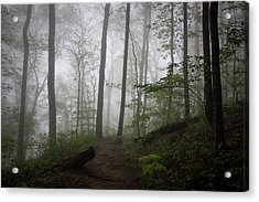 Acrylic Print featuring the photograph So Foggy by Ben Shields