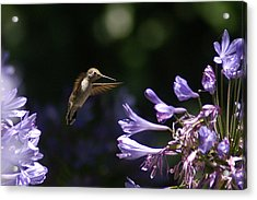 So Many To Choose From Acrylic Print