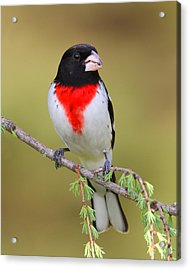 So Prim And Proper Acrylic Print by Gerry Sibell