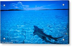 Soaking Up Some Rays Acrylic Print