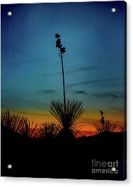 Soaptree Yucca At Sunset Acrylic Print