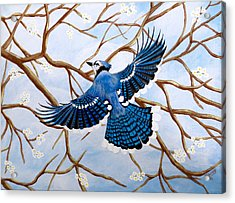 Acrylic Print featuring the painting Soaring Blue Jay  by Teresa Wing