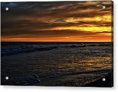 Soaring In The Sunset Acrylic Print by Kelly Reber