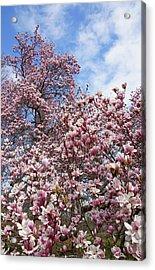 Soaring Magnolia Acrylic Print