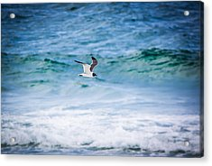 Soaring Over The Ocean Acrylic Print by Shelby Young