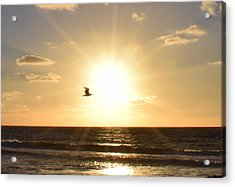 Soaring Seagull Sunset Over Imperial Beach Acrylic Print by Karen J Shine