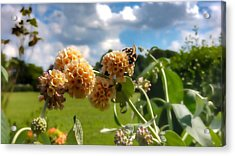 Acrylic Print featuring the photograph Sobaso by Isabella F Abbie Shores FRSA