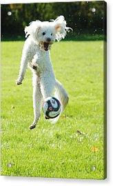 Soccer Dog-5 Acrylic Print