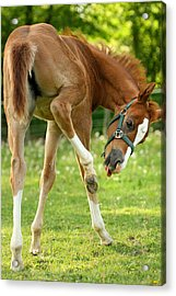 Acrylic Print featuring the photograph So....close.... by Angela Rath
