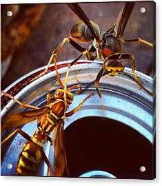 Soda Pop Bandits, Two Wasps On A Pop Can  Acrylic Print
