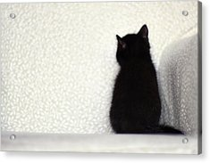 Acrylic Print featuring the photograph Sitting Kitty by Amy Tyler