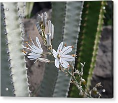 Pretty And Prickly - Beautiful White Flower Acrylic Print