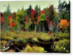 Acrylic Print featuring the photograph Soft Autumn Color by David Patterson