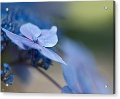 Acrylic Print featuring the photograph Soft Blue Moment by Lisa Knechtel