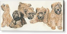 Soft-coated Wheaten Terrier Puppies Acrylic Print by Barbara Keith