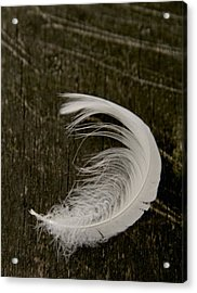 Soft Curve Two Acrylic Print by Odd Jeppesen