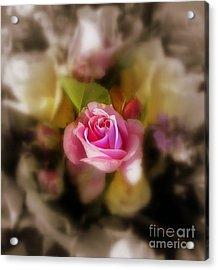 Soft Focus Acrylic Print