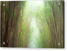 Soft Forest Light Acrylic Print