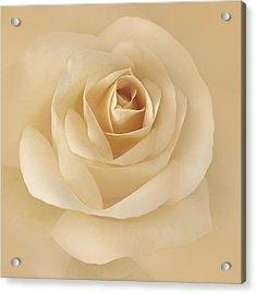 Soft Golden Rose Flower Acrylic Print by Jennie Marie Schell