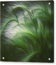 Soft Grass Acrylic Print by Scott Norris