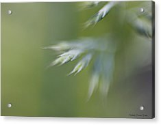 Acrylic Print featuring the photograph Soft Green by Michaela Preston
