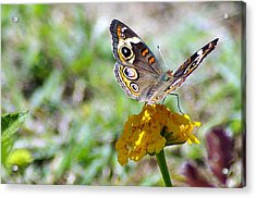Soft Landing 3 Acrylic Print by Don Prioleau