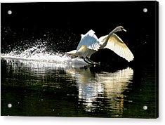 Soft Landing  Acrylic Print