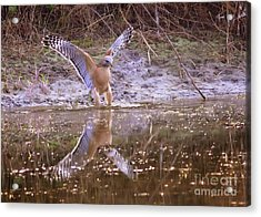 Soft Landing On The Pond Acrylic Print by Carol Groenen