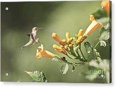 Soft Landing Acrylic Print by Robert Pearson