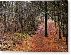 Soft Light In The Woods Acrylic Print by Phill Doherty