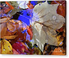 Soft Light Leaves Acrylic Print by Todd Breitling