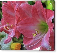 Acrylic Print featuring the photograph Soft Lilies by Robert Pilkington
