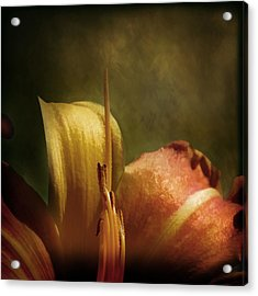 Acrylic Print featuring the photograph Soft Lily by Gary Smith