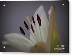 Soft Lily Acrylic Print
