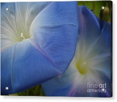 Soft Morning Glory Acrylic Print by Chad Natti